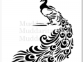 M0002_Peacock